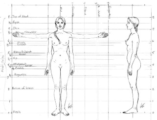 Female_proportions_front
