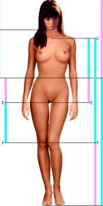 aliceproportions